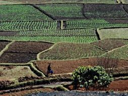 Crop fields in the Malagasy highlands, near Ambatolampy, Madagascar